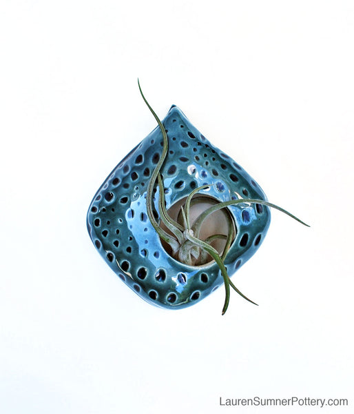 Air Plant Holder - Teal Blue Carved Design - Large