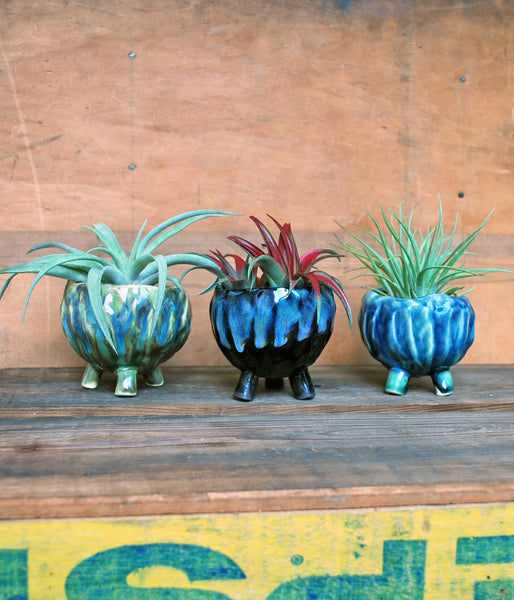 Tropical Pinch Pots - Air Plant Succulent Planters