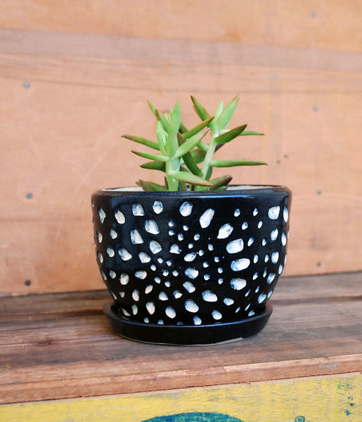 Black and White Ceramic Planter - Succulent Planter