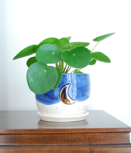 White and Blue Planter with Gold Moon Design, Small Drainage dish included, with Pilea Peperomioide plant