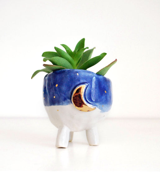 Small White and Blue Planter with Gold Moon Design, with succulent plant