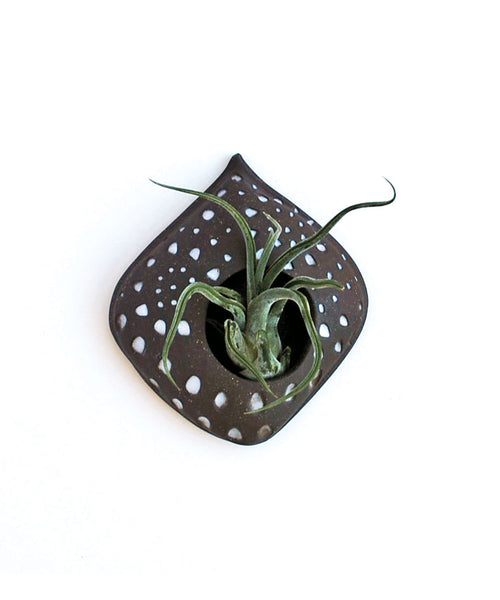 Air Plant Holder - Brown and White Carved Design - Small