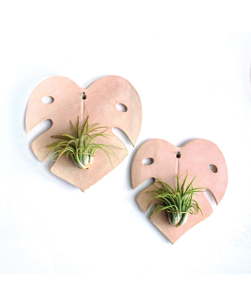 Pink Monstera Air Plant Holders