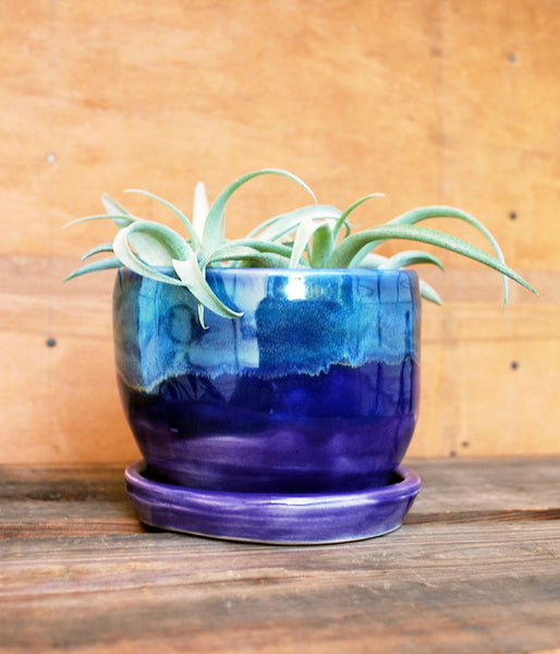 Purple Tropical Nights Ceramic Planter - Succulent Planter