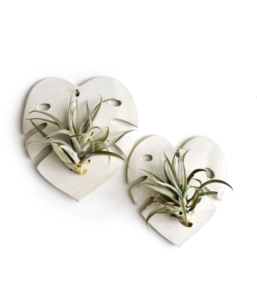 White Monstera Air Plant Holders