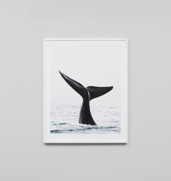 Whale tail photographic wall print