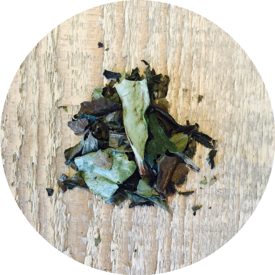 Three 6 Tea - Organic Pai Mu Tan - White Tea