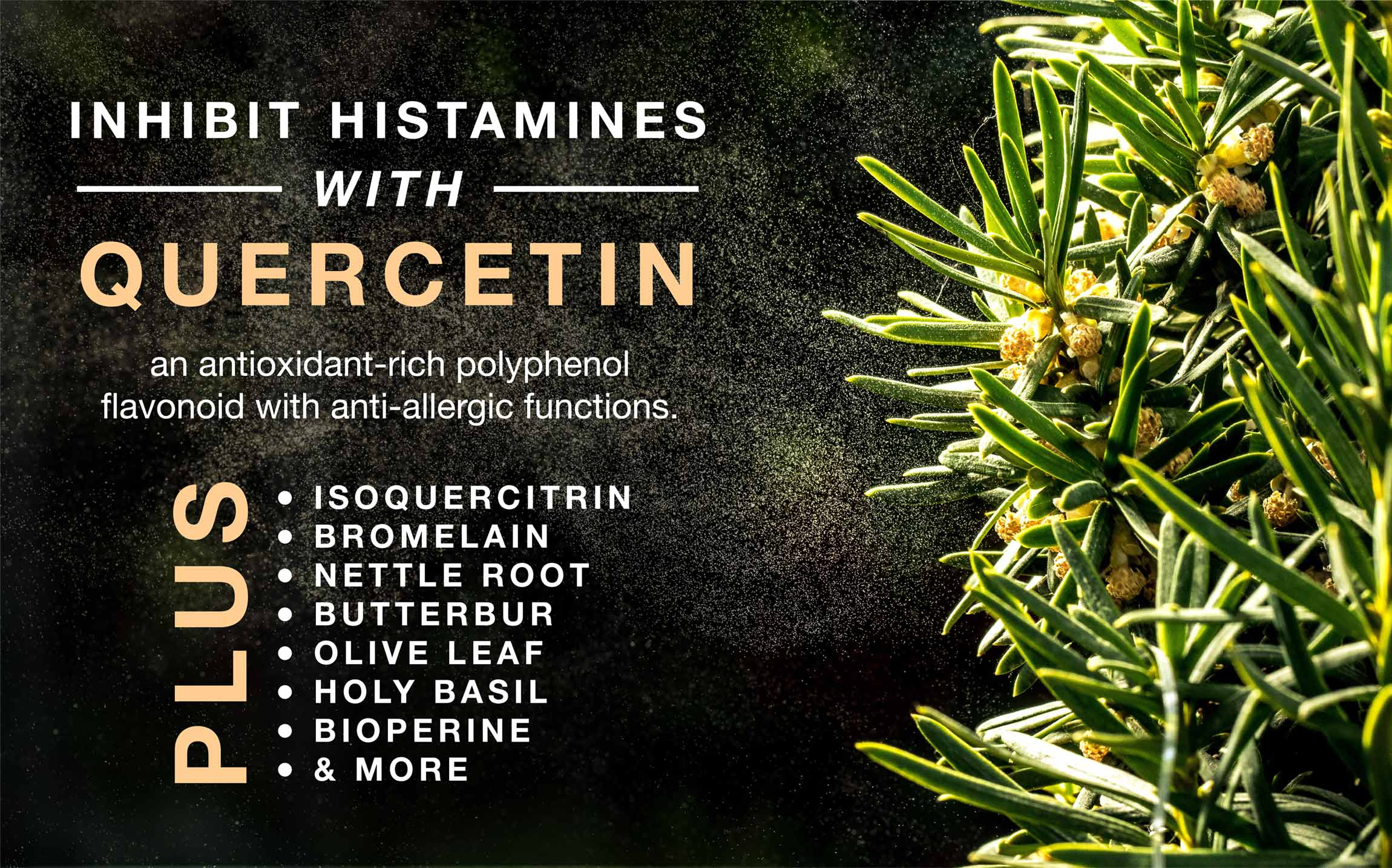 Inhibit histamines with Quercetin, an antioxidant-rich polyphenol flavonoid with anti-allergic functions.