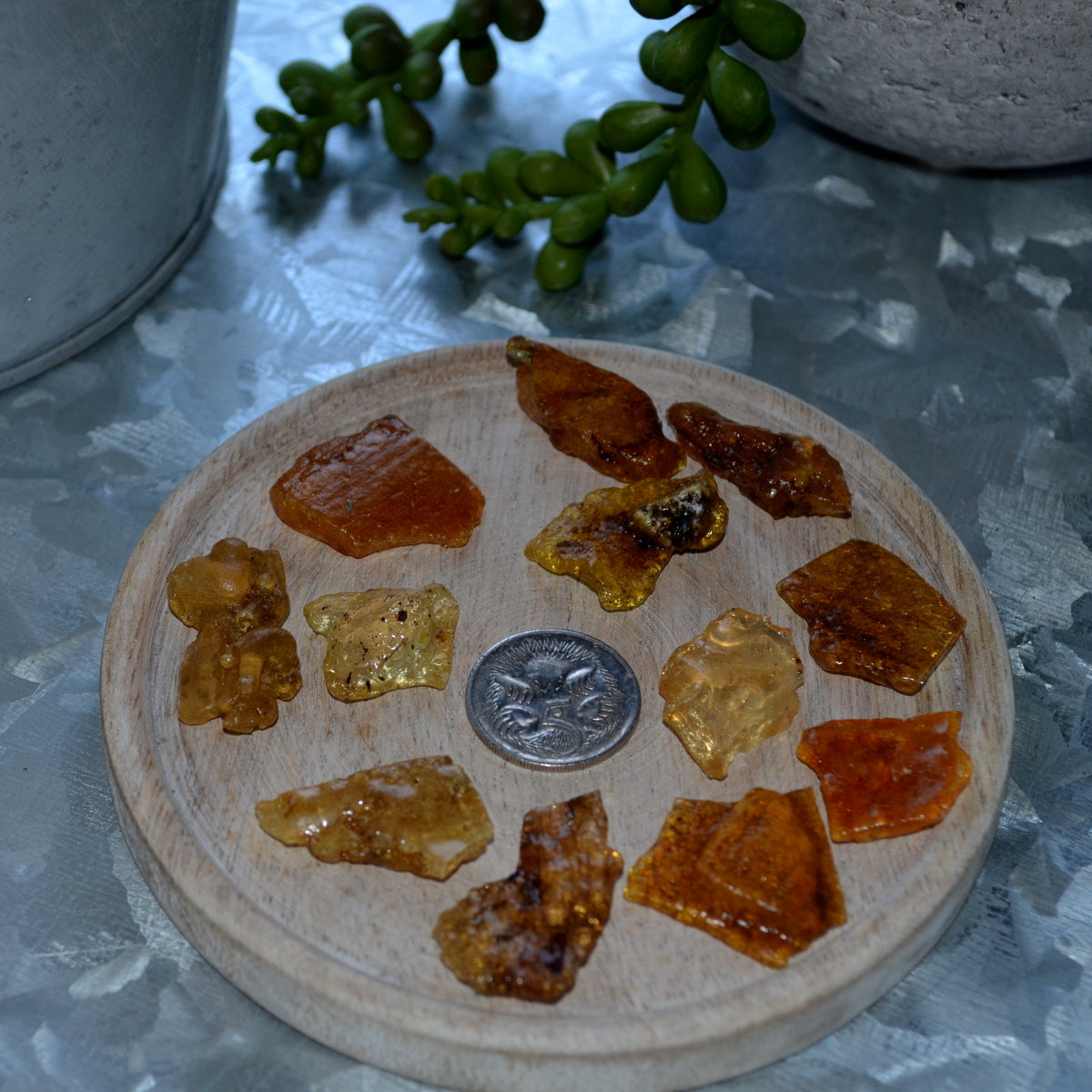 Copal Amber With Inclusions Specimens at Illiom Crystals - Afterpay Available