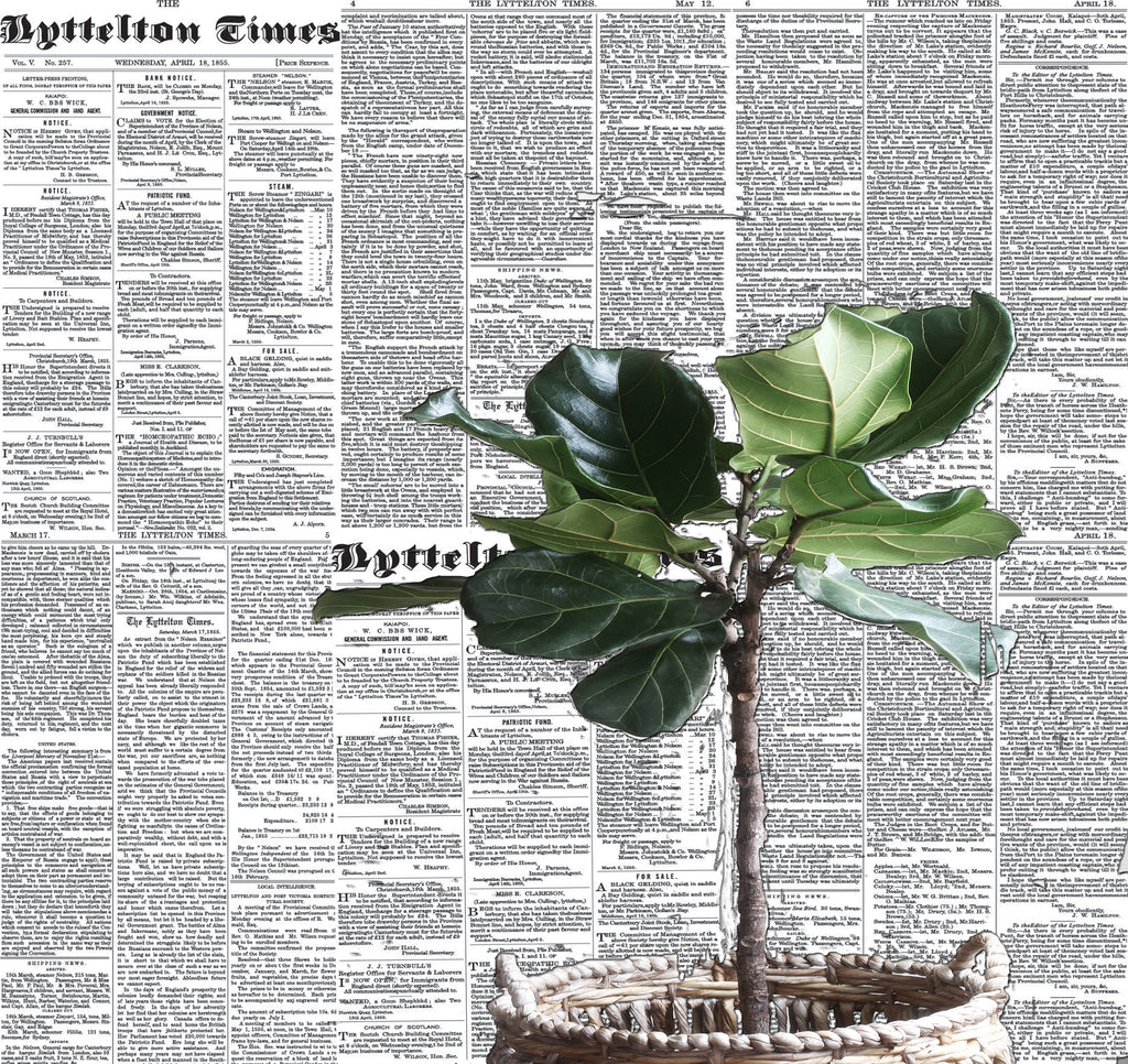 Lyttelton Times Newspaper Wallpaper