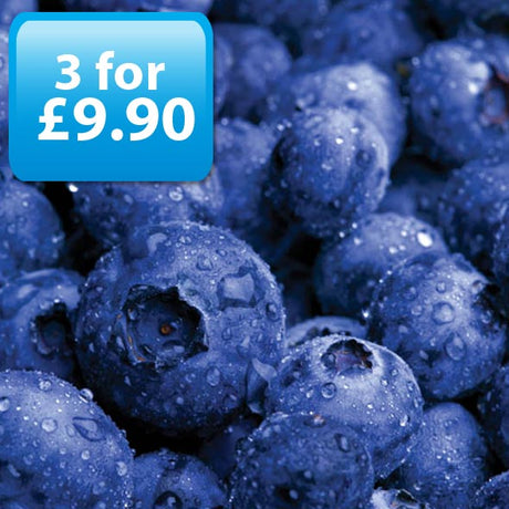Blueberry E-Liquid by Best4ecigs (10ml) - Best4ecigs Vape