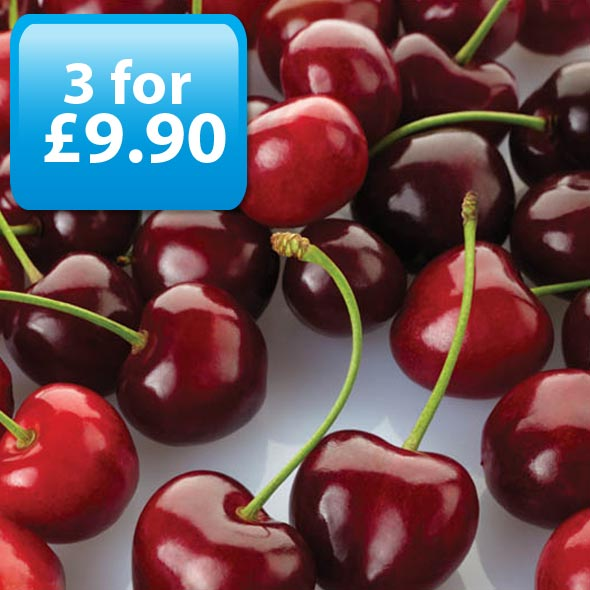 Cherry E-Liquid by Best4ecigs (10ml) - Best4ecigs Vape