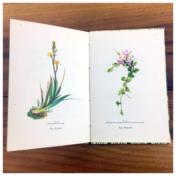 Miscellaneous - Flowers Of Marsh And Stream