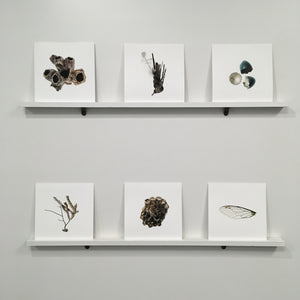 unframed digital photographs, Emily Sullivan Smith