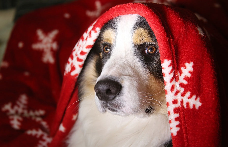 Dangerous Food And Drink For Dogs At Christmas