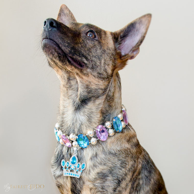 Dixie-bayou-blend-dog-thy-fairest-fido-wearing-Eternal-Gems-purple-and-teal-layered-with-crowned-jewels-blue-dog-jewelry