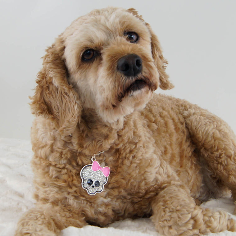 Cj-Cockapoo-dog-thy-fairest-fido-wearing-dog-jewelry-lavalier-layers-sugar-skull-pendant-with-pink-bow