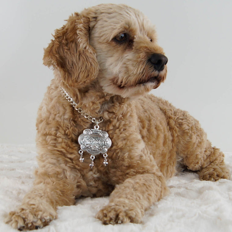 Cj-Cockapoo-dog-thy-fairest-fido-wearing-dog-jewelry-lavalier-layers-silver-longevity-locket