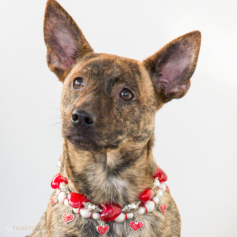 Dixie-bayou-blend-dog-thy-fairest-fido-wearing-Happy-hearts-red-layered-with-cascading-hearts-2/3-width-2/3-dog-jewelry