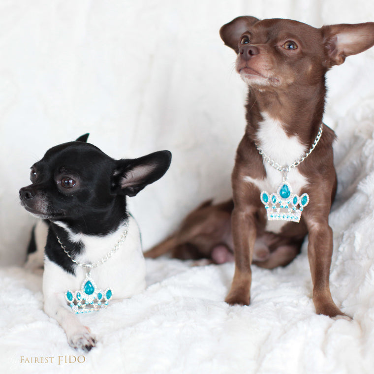 Hunky-and-louie-chihuahua-dogs-thy-fairest-fido-models-wearing-crown-jewels-blue-lavalier-layers-dog-jewelry