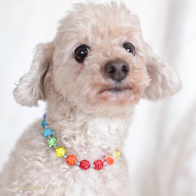 Maltipoo-dog-Ryder-thy-fairest-fido-model-wearing-rhinestone-over-the-rainbow-width-2