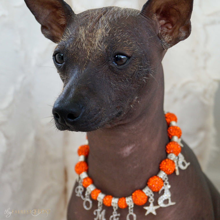 Xoloitzcuintli-dog-romeo-thy-fairest-fido-model-wearing-written-in-the-stars-aries-orange-pendant