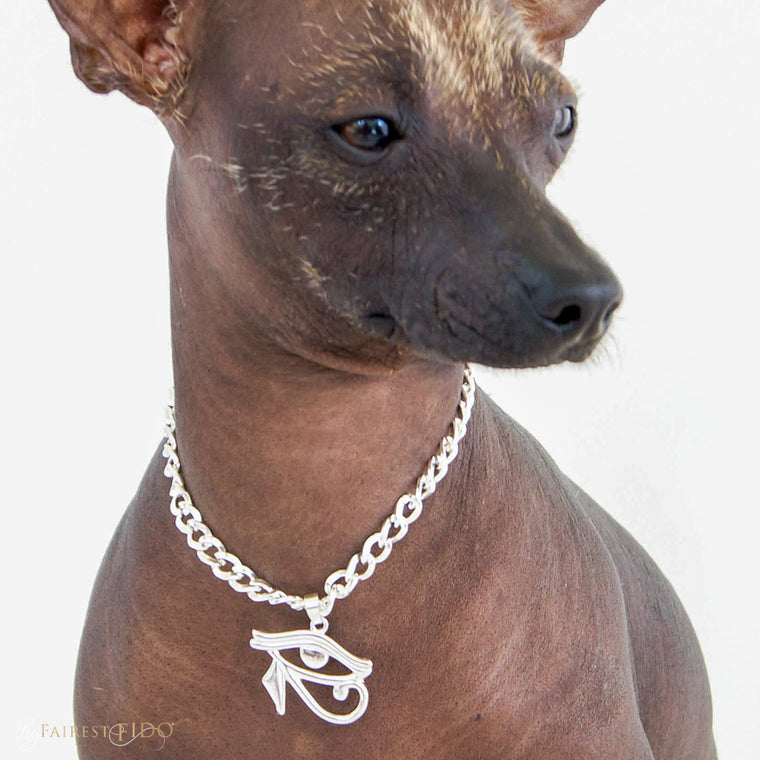 Xoloitzcuintli-dog-romeo-thy-fairest-fido-model-wearing-eye-of-horus-silver-pendant