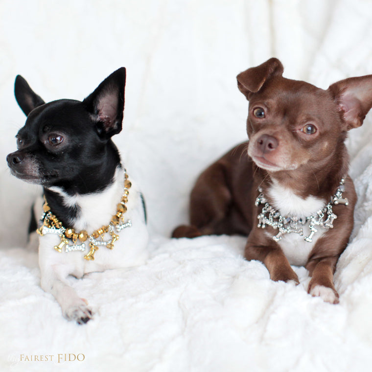 Hunky-and-louie-chihuahua-dogs-thy-fairest-fido-models-wearing-bone-collector-gold-and-silver-width-0-dog-jewelry