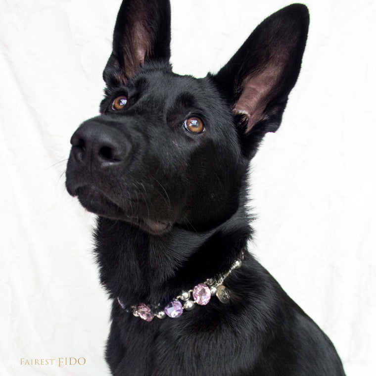 Riley-black-german-shepard-eternal-gems-pink-purple-width-3-dog-jewelry-thy-fairest-fido