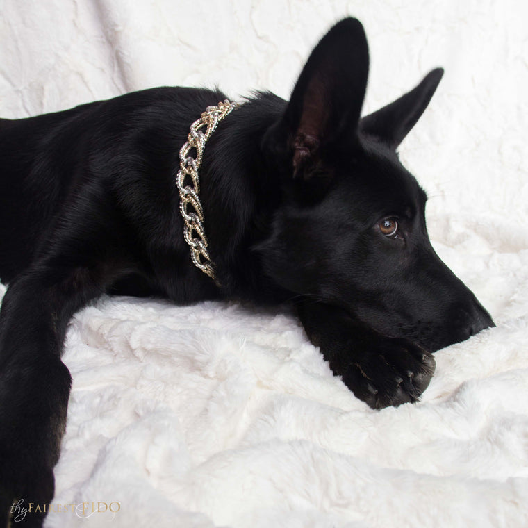 Riley-black-german-shepard-TFF-signature-chain-gold-width-3-dog-jewelry-thy-fairest-fido