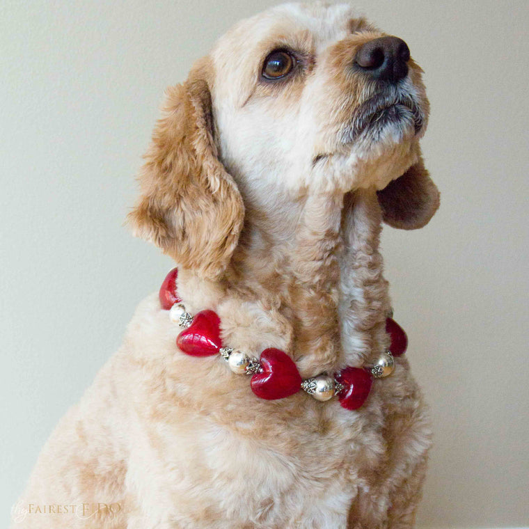 Cj-Cockapoo-dog-thy-fairest-fido-wearing-dog-jewelry-Happy-hearts-red-width-2/3