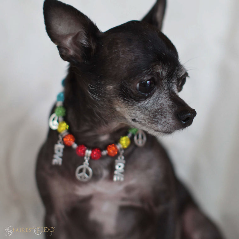 Bean-chihuahua-dog-thy-fairest-fido-model-wearing-peace-and-love-width-0-charmed-royalty