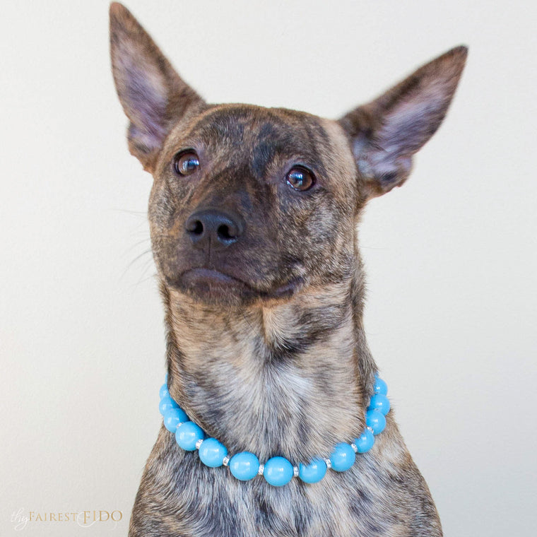 Dixie-bayou-blend-dog-thy-fairest-fido-wearing-classic-beauty-swarovski-teal-pearls-dog-jewelry