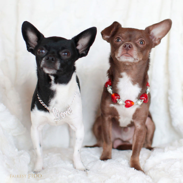 Hunky-and-louie-chihuahua-dogs-thy-fairest-fido-models-wearing-chained-to-love-and-happy-hearts-red-width-0/1-dog-jewelry
