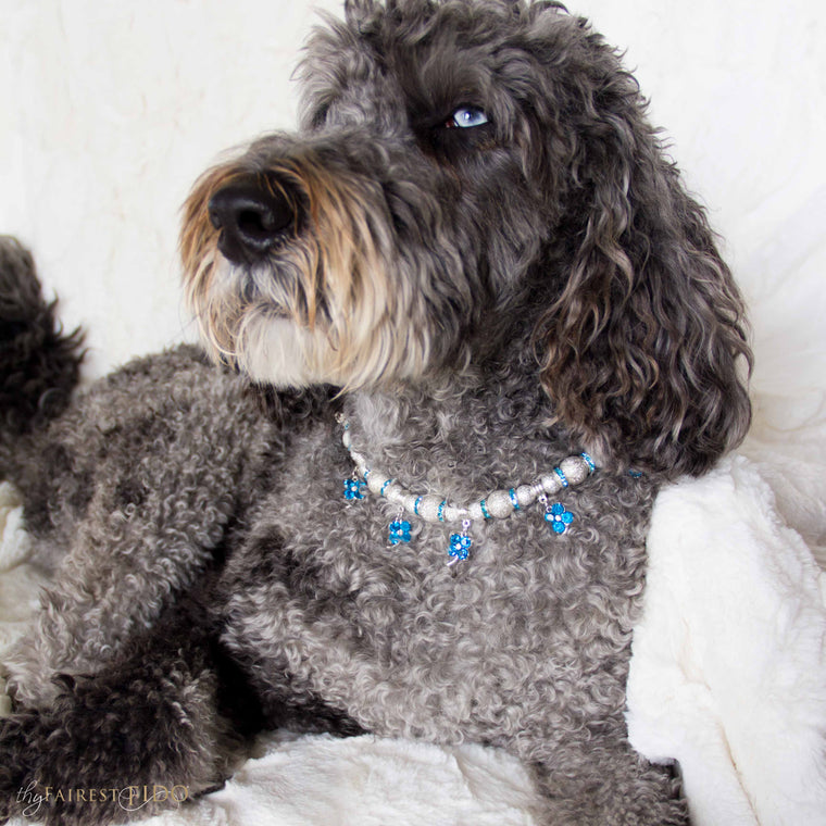 Hurly-labradoodle-dog-thy-fairest-fido-wearing-Cascading-Flowers-width-2/3-blue
