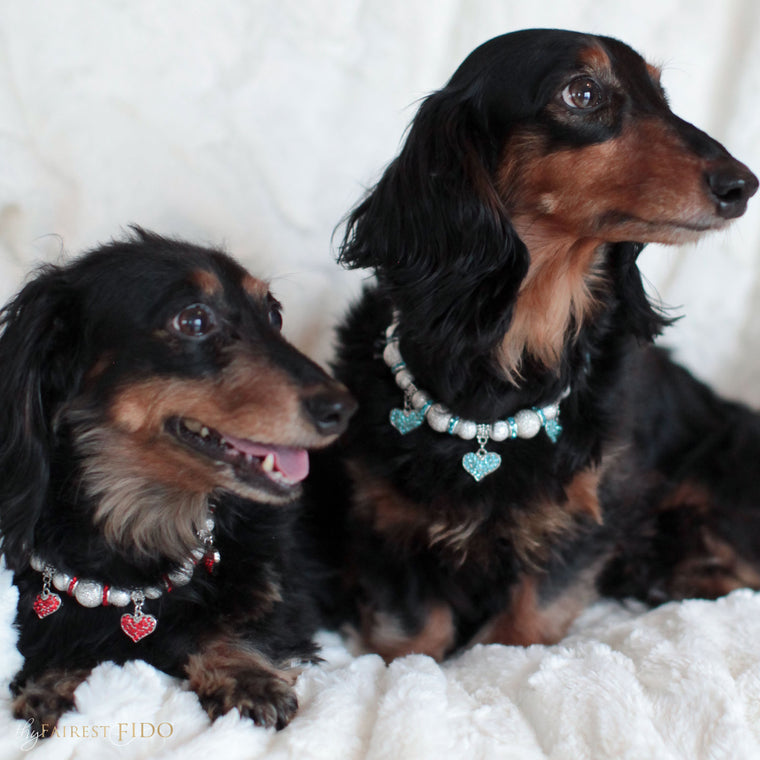 Sonya-and-bruce-dachshunds-black-thy-fairest-fido-dog-jewelry-cascading-hearts-red-on-sonya-and-blue-on-bruce-both-width-2