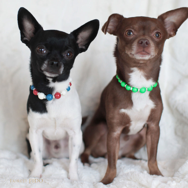 Hunky-and-louie-chihuahua-dogs-thy-fairest-fido-models-wearing-classic-pearls-americana-width-0-and-viabrant-pearls-green-width-0-dog-jewelry