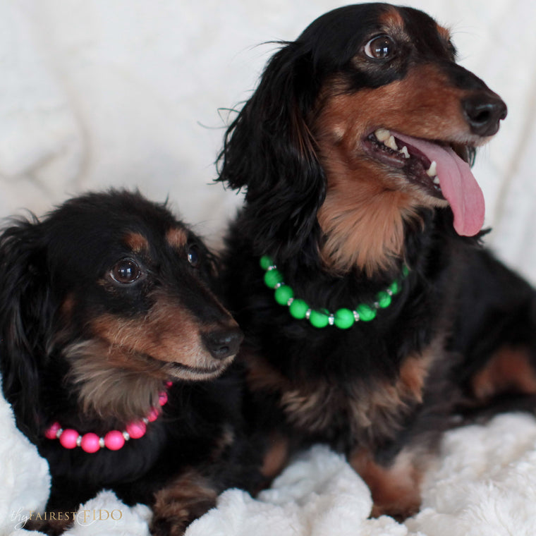 Sonya-and-bruce-dachshunds-black-thy-fairest-fido-dog-jewelry-vibrant-swarovski-pearls-pink-on-sonya-and green-on-bruce-both-width-2