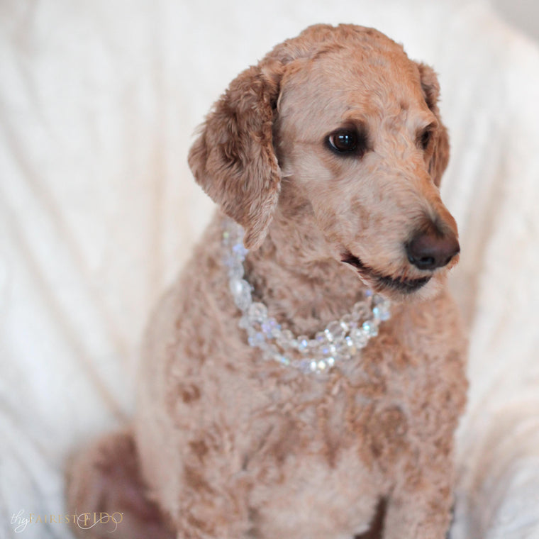 Goldendoodle-dog-sammie-stately-statements-crystal-cz-width-3-triple-row-thy-fairest-fido-dog-jewelry