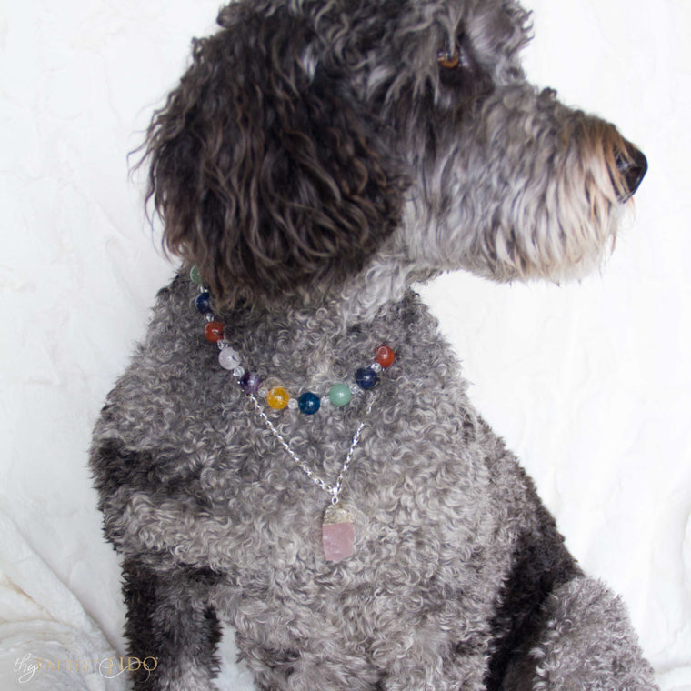 Hurly-labradoodle-dog-thy-fairest-fido-wearing-Crystal-infustion-layered-with rose-quartz-pendant-width-3