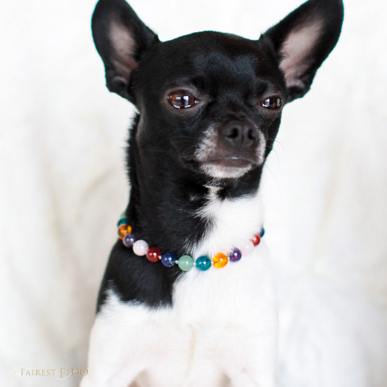 Louie-chihuahua-dog-thy-fairest-fido-models-crystal-infusion-width-0-dog-jewelry