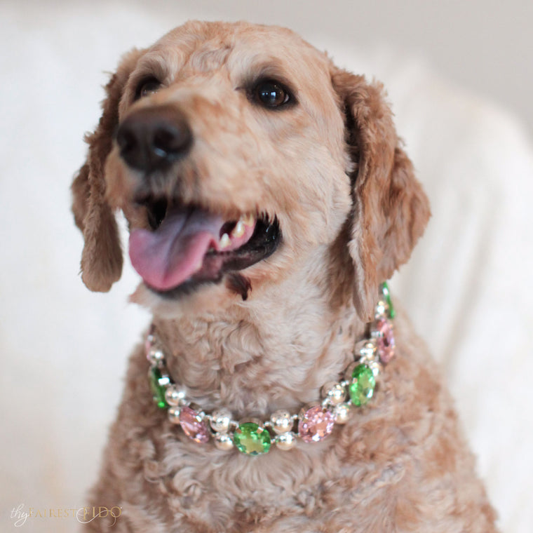 Goldendoodle-dog-sammie-eternal-gems-pink-peridot-width-3-thy-fairest-fido-dog-jewelry