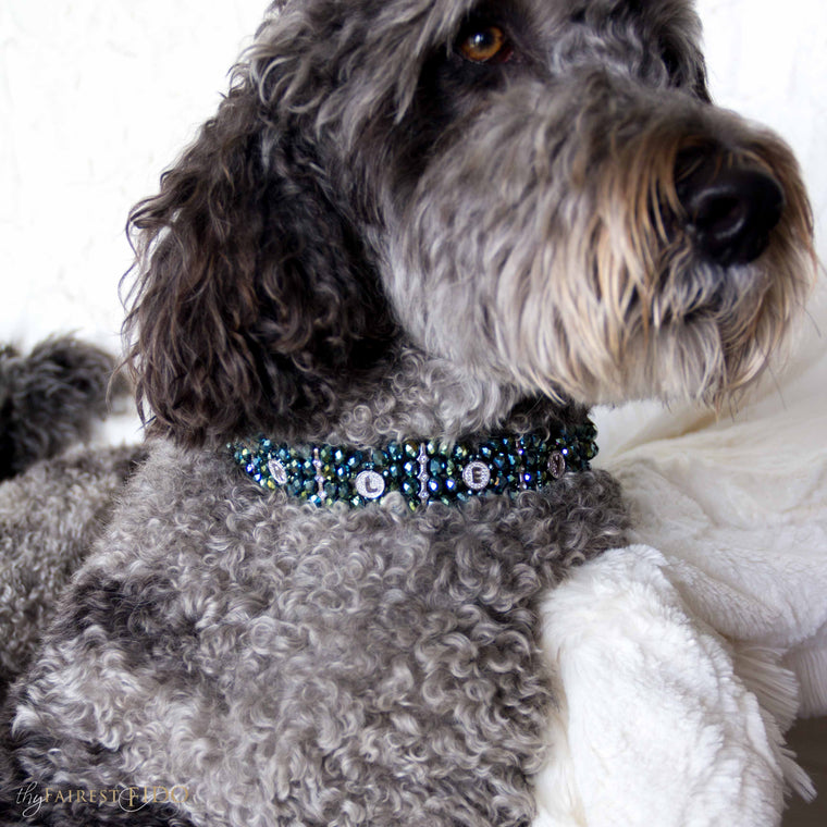 Hurly-labradoodle-dog-thy-fairest-fido-wearing-personalized-Namesake-green-width-3-dog-jewelry