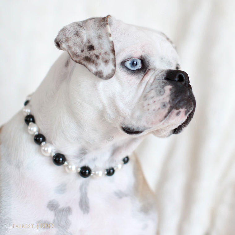 Bella-Bulldog-thy-fairest-fido-dog-jewelry-wearing-Swarovski-Classic-pearls-width-3-Black-and-white