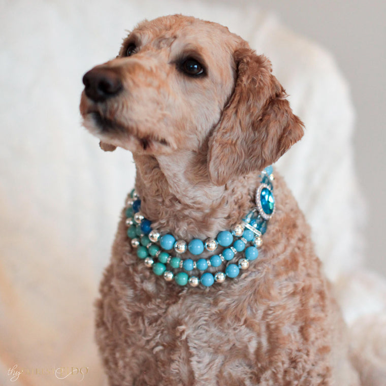 Goldendoodle-dog-samnie-ombre-pearls-blue-width-3-triple-row-swarovski-pearl-thy-fairest-fido-dog-jewelry