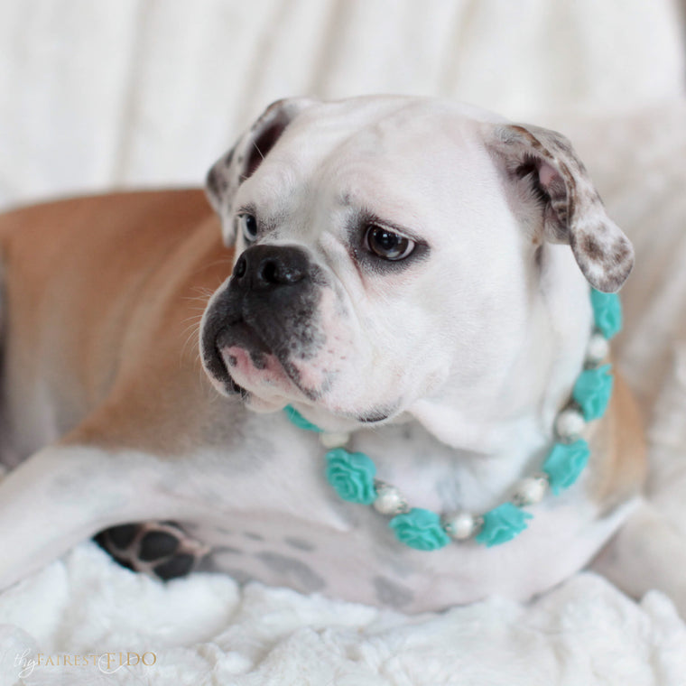 Bella-Bulldog-thy-fairest-fido-dog-jewelry-wearing-Secret Garden-teal-width-2/3