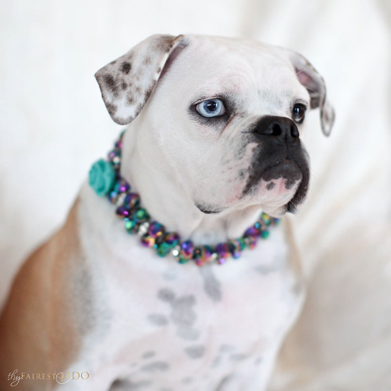 Bella-Bulldog-thy-fairest-fido-dog-jewelry-wearing-Swarovski-Majestic-Metallic-irridescent-with-teal-flower-width-3
