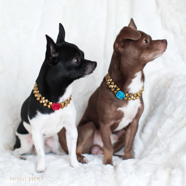 Hunky-and-louie-chihuahua-dogs-thy-fairest-fido-models-wearing-majestic-metallics-gold-with-red-and-blue-flowers-width-1-signature-dog-jewelry