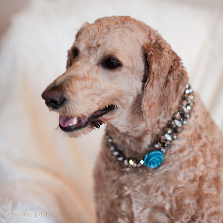 Goldendoodle-dog-sammie-majestic-metallic-silver-with-blue-flower-width-3-thy-fairest-fido-dog-jewelry