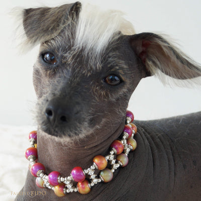 Moodier Pooch, Two Rows of color changing pink, red, orange and yellow beads with rhinestone spacer bars AAA on Stella a puervian Inca orchid dog